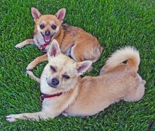 Macy and Molly