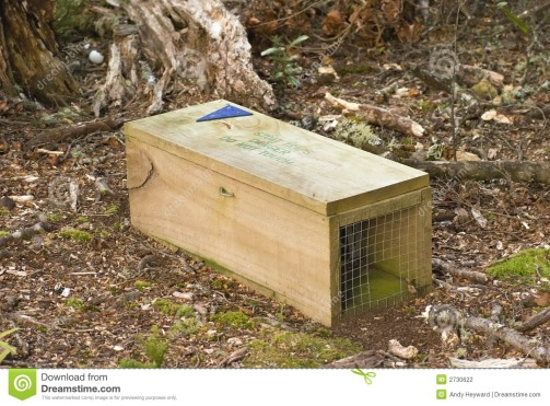 stoat-trap-2730622